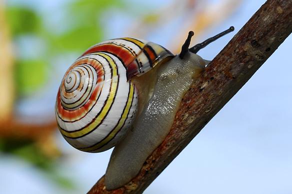 animais-invertebrados