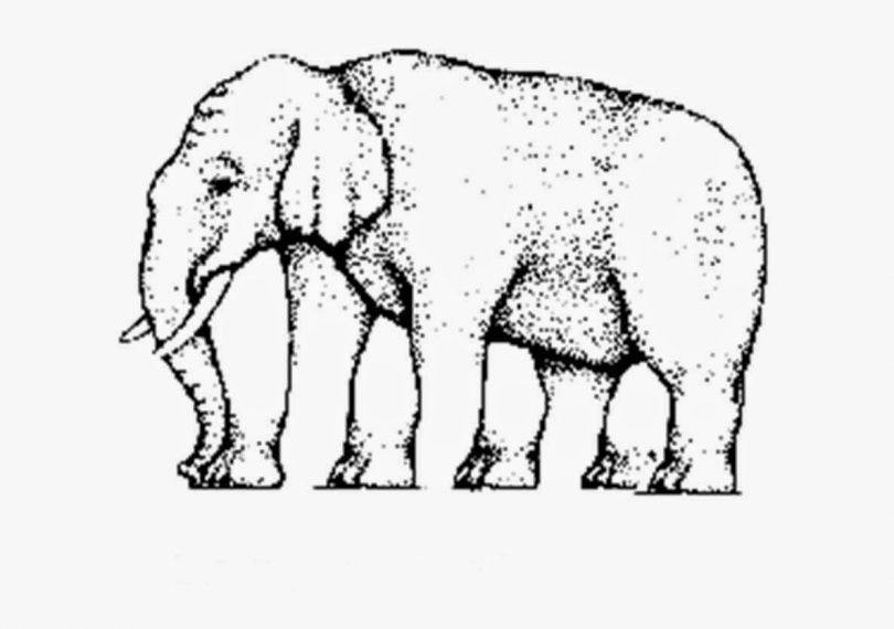 ilusao-elefante
