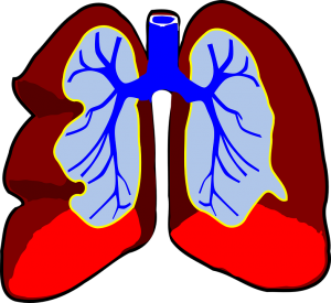 lungs-39980_960_720