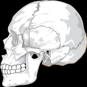 Quais São Os Ossos Do Crânio Voupassar