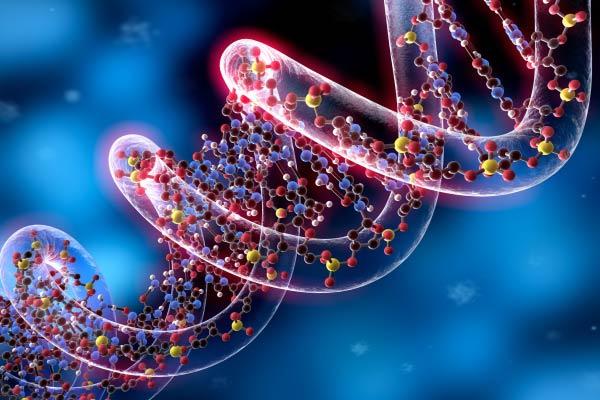 Homozigoto e heterozigoto